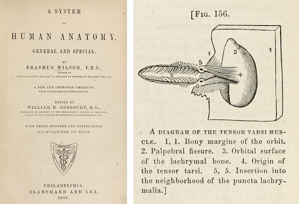 The title page and a detail showing the tensor tarsi from Gobrecht's acclaimed 1858 edition of Wilson's Anatomy. U.S. National Library of Medicine Digital Collections.