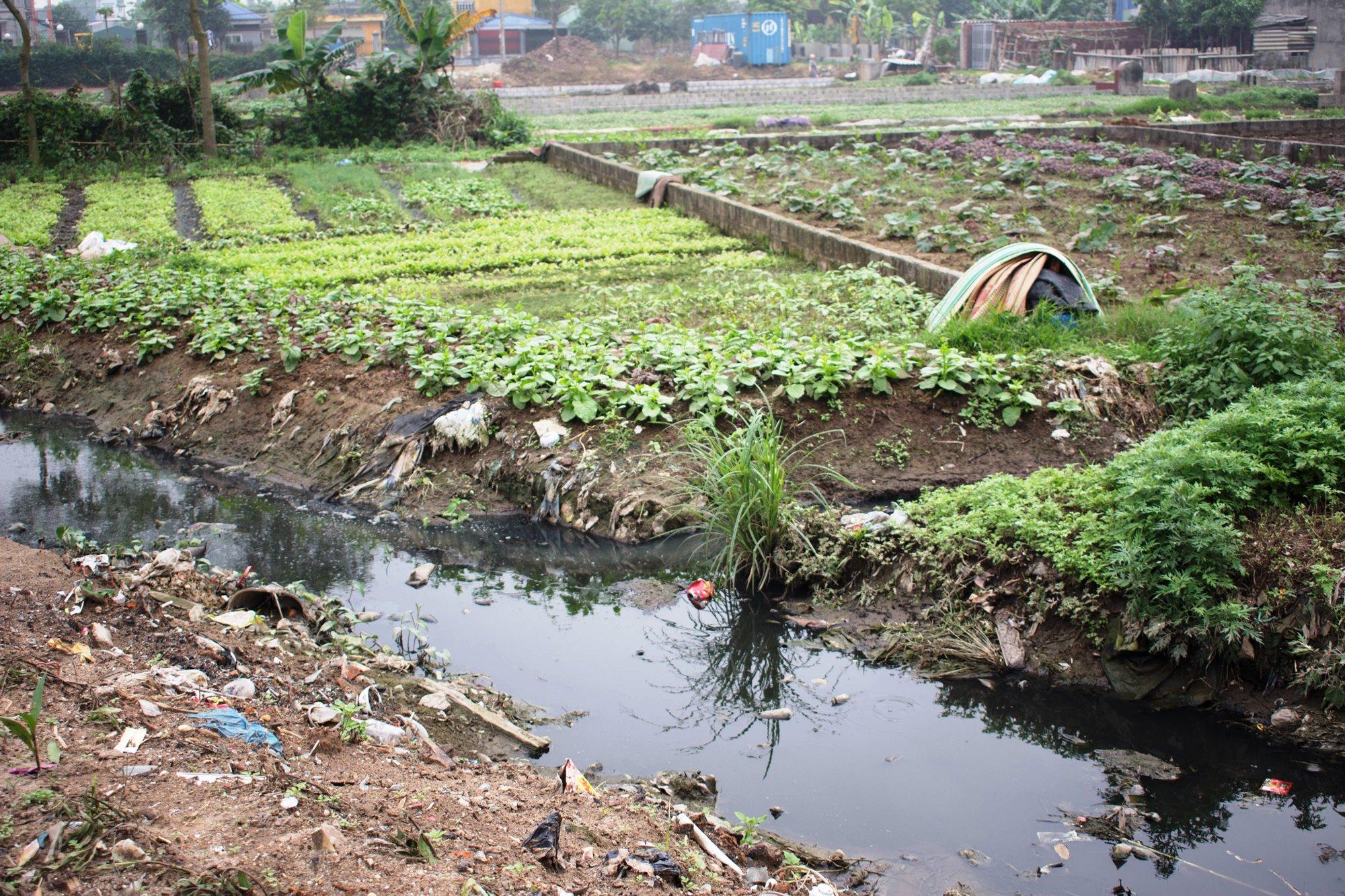 Thiếu nước sạch, nhiều khu vực, người dân phải dùng nước bẩn từ kênh mương để tưới rau. (Ảnh: Thoa Chu/Vietnam+)