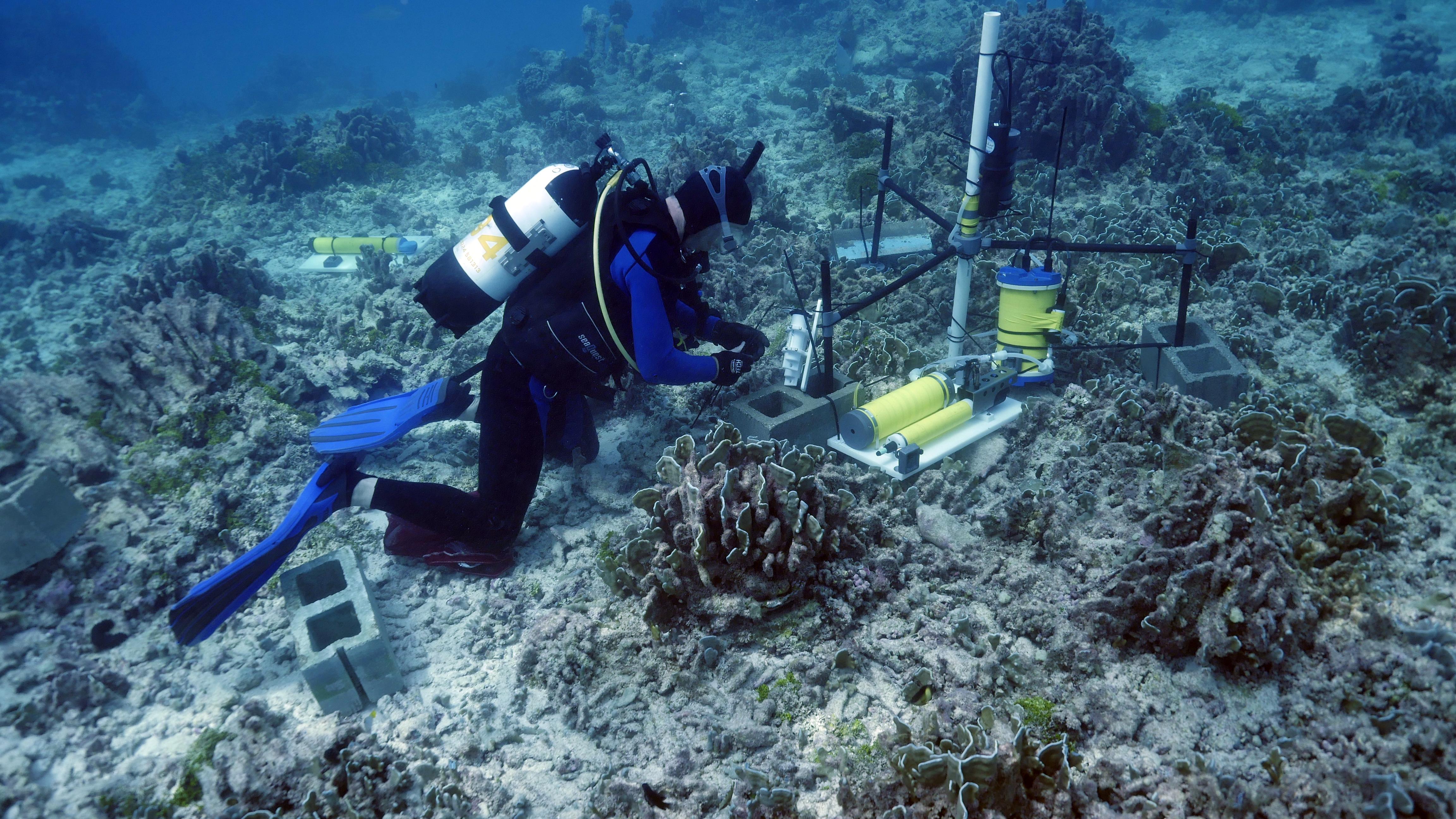 Hoạt động đo đạc, khảo sát môi trường biển. (Nguồn: zsl.org)