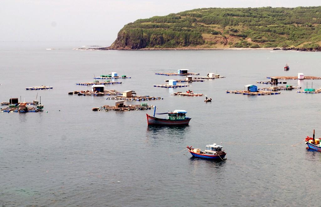 Vì lợi nhuận, người dân tổ chức ương nuôi tôm hùm trái phép gần thắng cảnh quốc gia gành Đá Đĩa (huyện Tuy An), xả chất thải sinh hoạt trực tiếp xuống biển, ảnh hưởng đến môi trường biển và du lịch nơi đây. (Ảnh: Thế Lập/TTXVN)