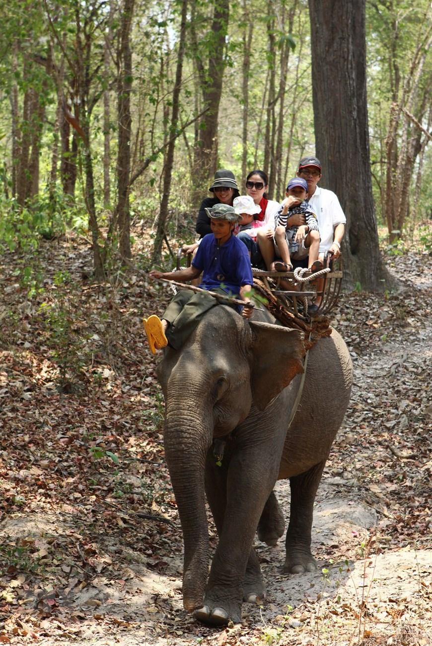 Voi phục vụ chở du khách tham quan ở Vườn Quốc gia Yok Don. (Ảnh: Dương Giang/TTXVN)