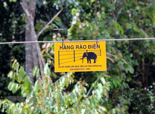 Hàng rào điện có chiều dài 50km nhằm ngăn voi rừng vào phá nương rẫy của người dân. (Ảnh: Sỹ Tuyên/TTXVN)
