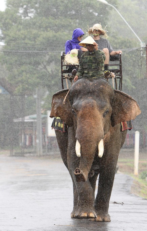 Voi phục vụ du khách ở Hồ Lắk. (Ảnh: Dương Giang/TTXVN)