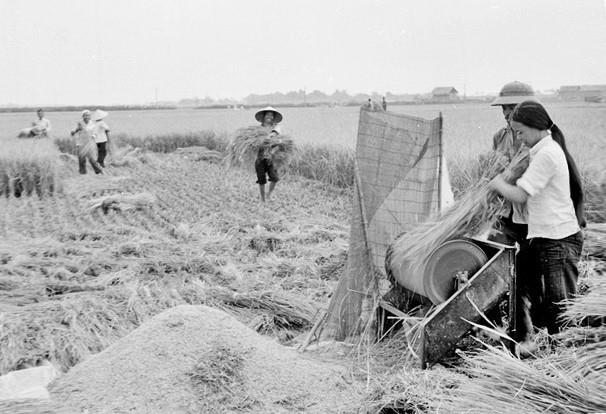 Gia đình xã viên Hợp tác xãPhương Đình, huyện Đan Phượng (Hà Nội) dùng máy tuốt lúa đạp chân để tăng năng suất lao động trong vụ mùa. (Ảnh: Đình Na/TTXVN)