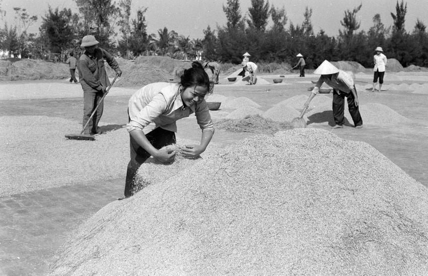Do thực hiện khoán sản phẩm, tích cực thâm canh, hợp tác xãHải Thanh, huyện Hải Hậu (Hà Nam Ninh) đạt năng suất lúa mùa 2 tấn/ha, đưa năng suất 2 vụ lúa lên 11 tấn, vượt sản lượng khoán 1320 tấn thóc. Cuối năm 1983, liên tục 3 năm, hợp tác xãHải Thanh đạt năng suất trên 10 tấn/ha/năm và phấn đấu bán thêm 400 tấn thóc cho nhà nước theo giá thỏa thuận. (Ảnh: Bùi Tường/TTXVN)