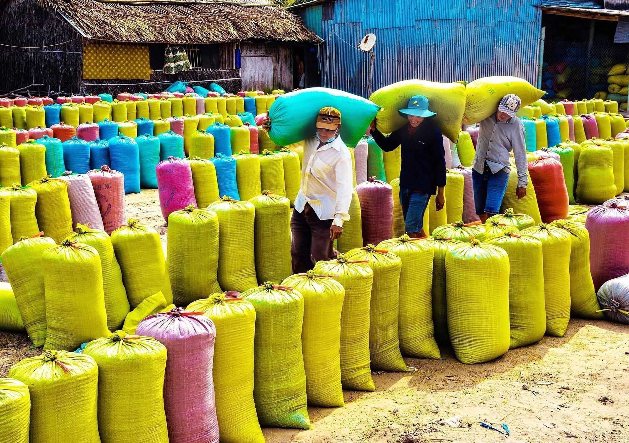 """Từ thành tựu của """"Khoán 10"""", nông nghiệp Việt Nam ngày càng phát triển theo hướng đi mới, trong đó từ chỗ """"tự cung tự cấp"""" đã chuyển sang sản xuất hàng hóa, đưa nhiều giống lúa năng suất cao vào gieo trồng đi đôi với đẩy mạnh ứng dụng khoa học kỹ thuật. Trong ảnh: Sau hơn 30 năm đổi mới, từ chỗ là nước thiếu gạo, phải nhập khẩu, Việt Nam đã vươn lên trở thành nước xuất khẩu gạo đứng thứ hai thế giới. (Ảnh: TTXVN phát)"""